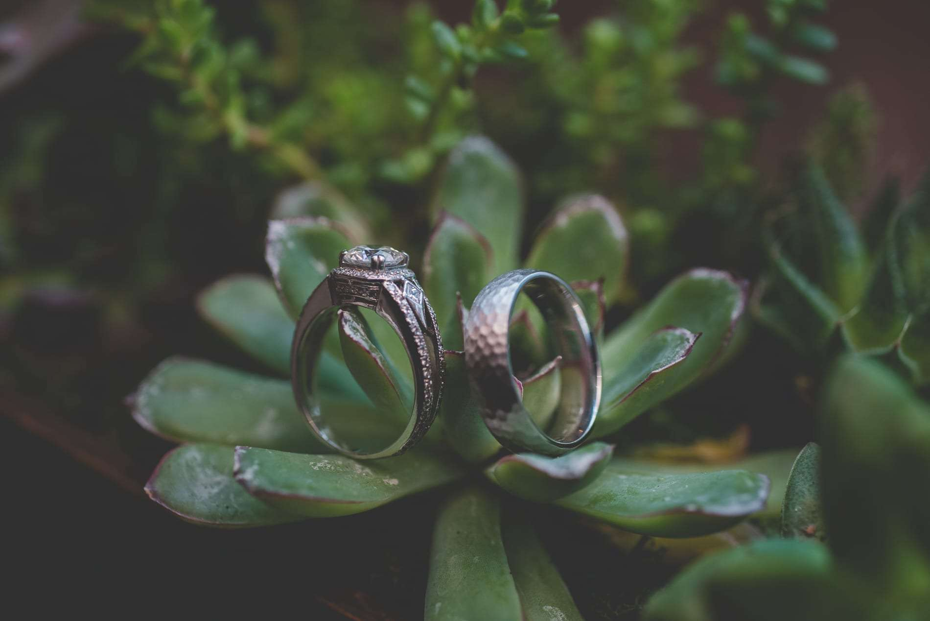 Succulent wedding decor wedding ring macro photography
